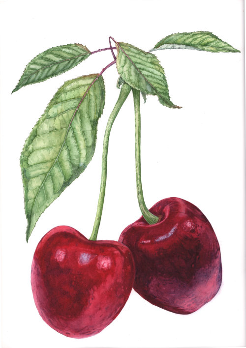 Watercolor painting of red apple