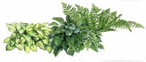 Painting botanical plant