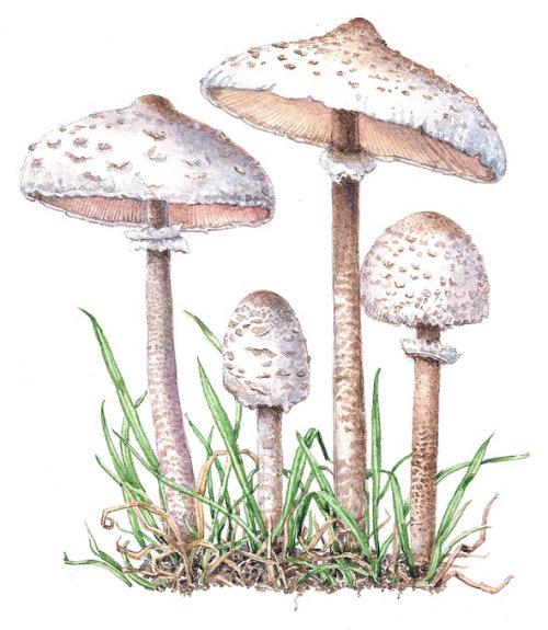 Wild mushroom digital painting