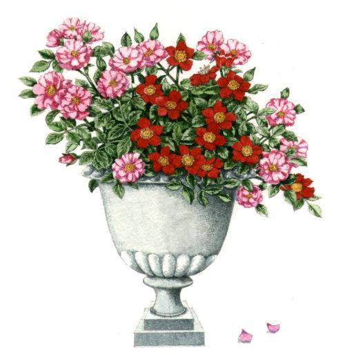 Floral Pont nature illustration