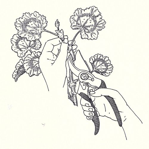 Black and white flowers illustration