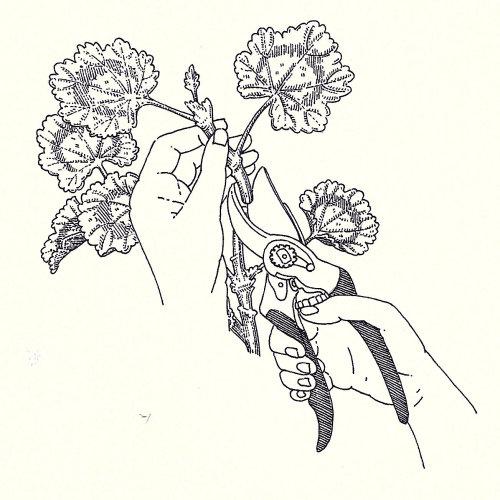 Black and white flowers illustration