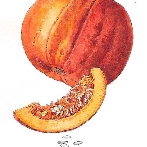 Food illustration of Pumpkin Slice