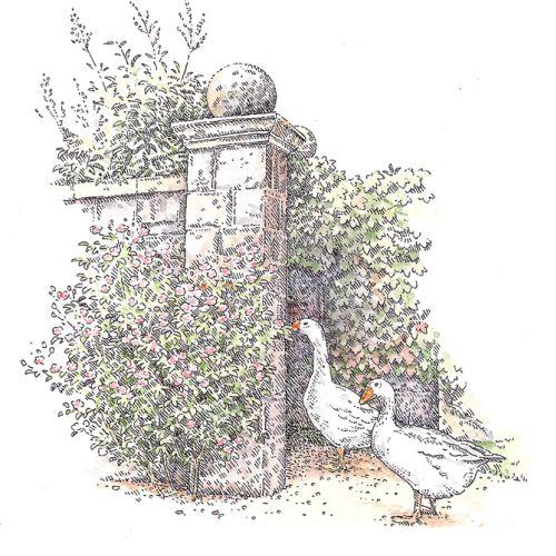 Duck nature illustration