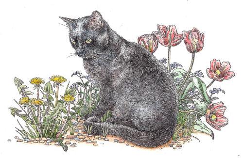 Animal illustration of black short haired cat
