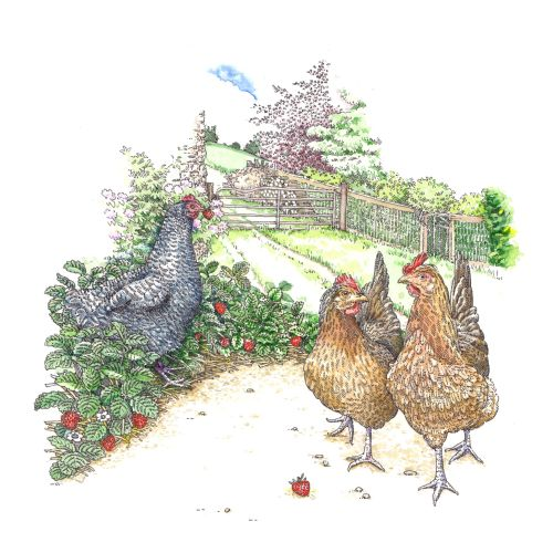 Digital painting of chicken