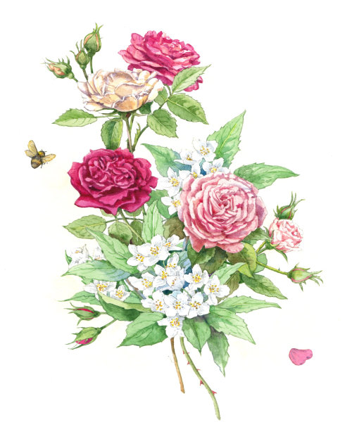 Nature illustration of roses