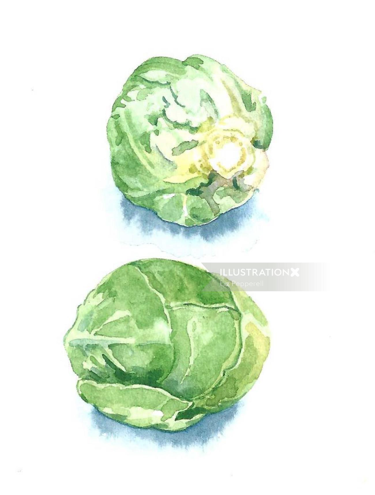 Watercolor art of Vegetables- Sprouts