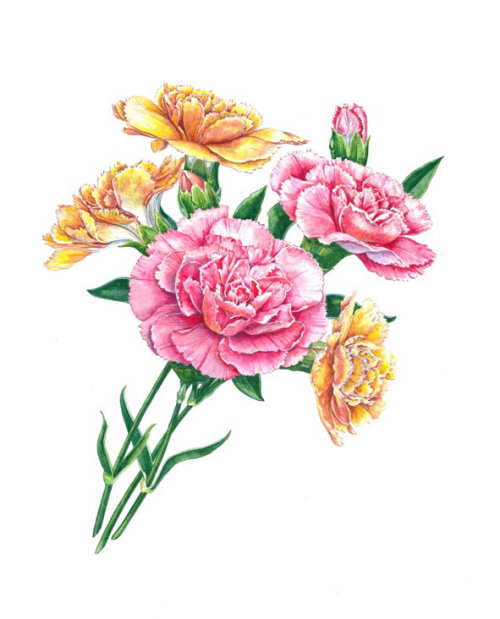 Carnations Watercolor art