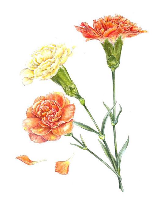 Liz Pepperell nature illustration