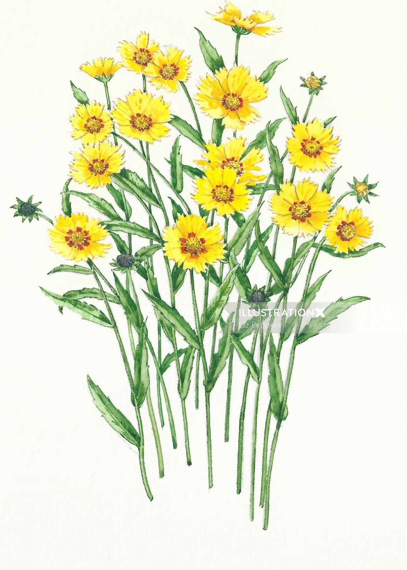 Watercolor art of coreopteris