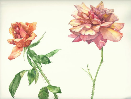 Garden roses watercolor painting