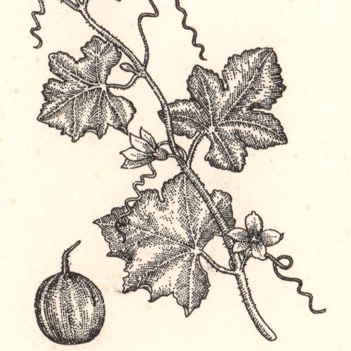 Liz Pepperell Wood Engraving & Etching