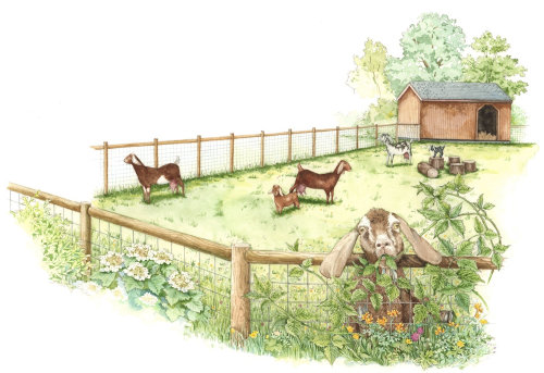 Watercolor painting of small sheep farm