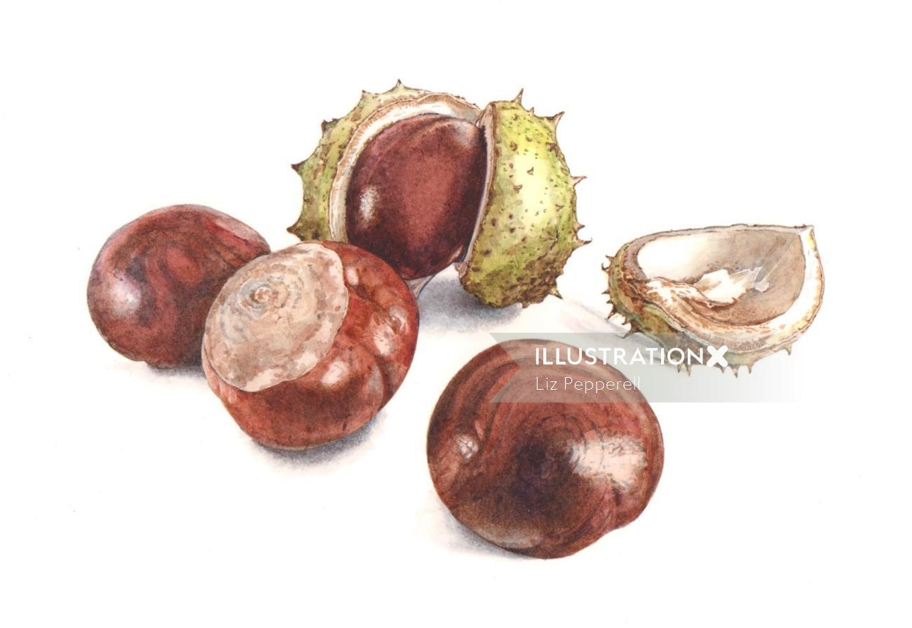 Food illustration of Dwarf Chestnut