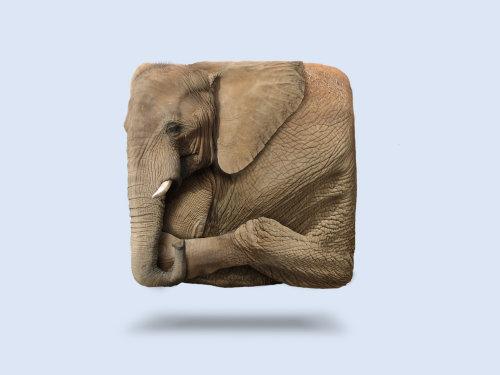 Animal illustration of Elephant