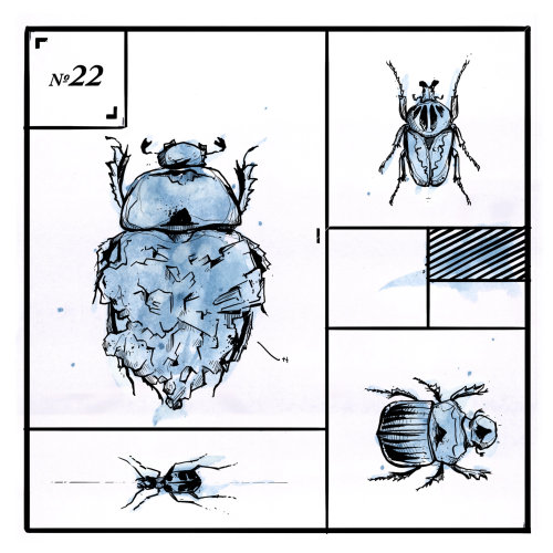 Loose animal illustration of bug