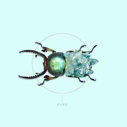 Animal illustration green bug