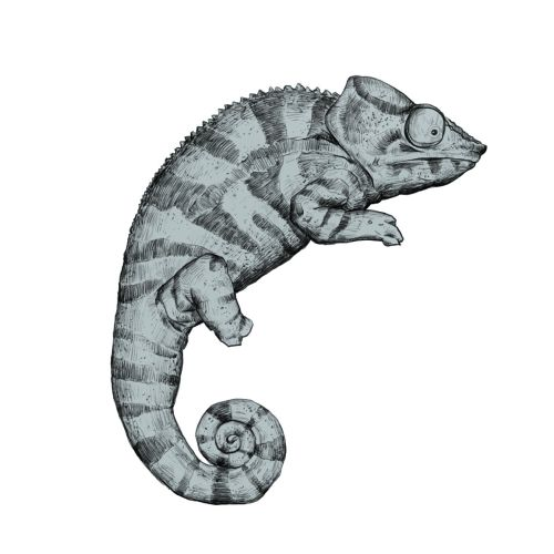 animal illustration of lizard