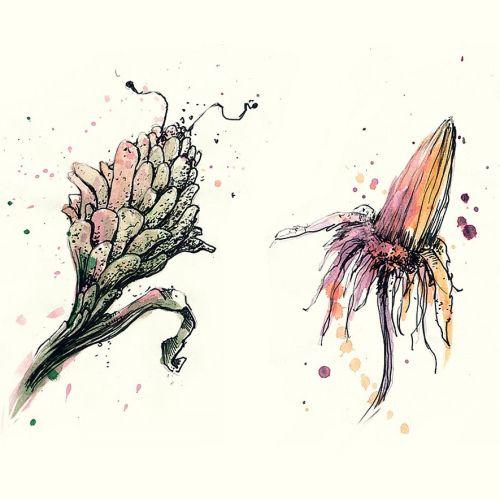 Loose illustration of flower