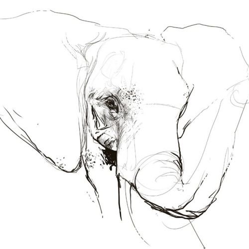 Line illustration face of elephant