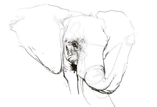 Line illustration face of elephant