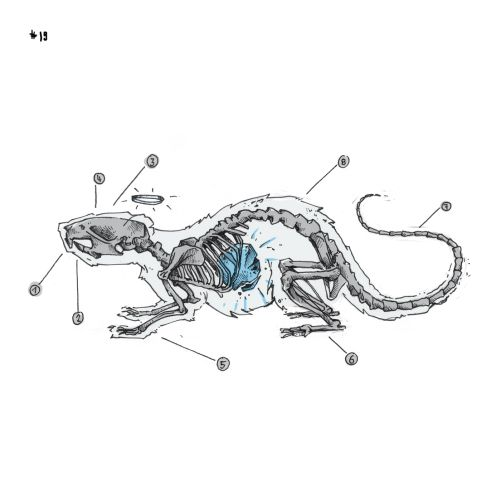 Loose illustration of dinosaur skeleton