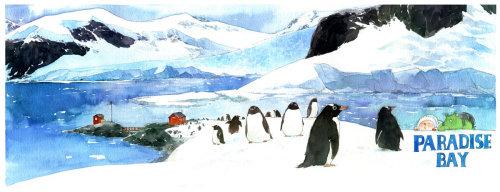 Animals penguins