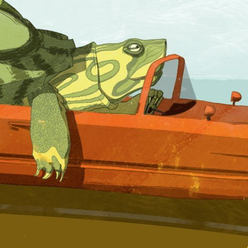 Illustration of tortoise driving car