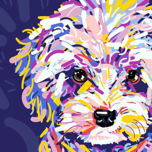 Poodle Portrait illustration by Mallory Heyer