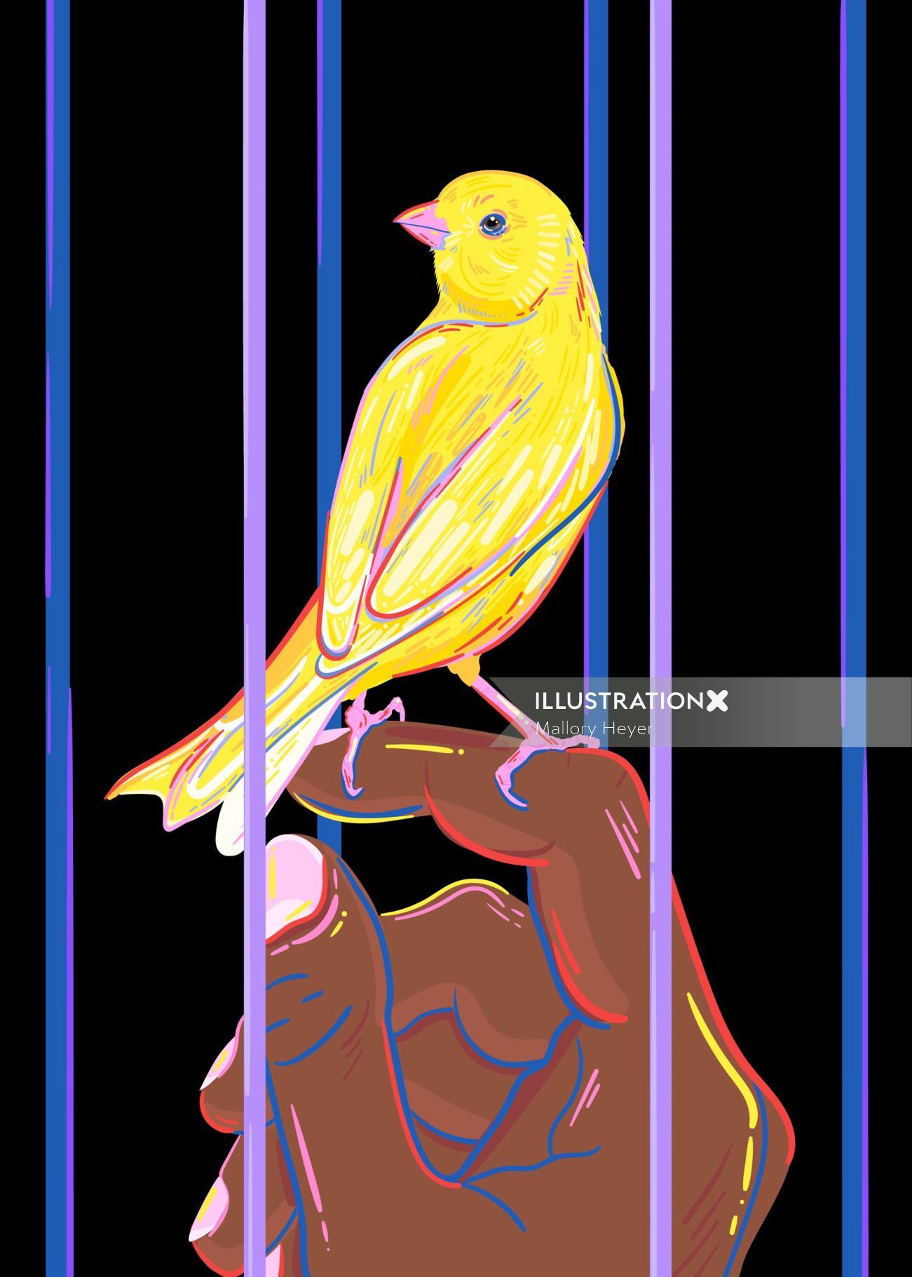 Animals yellow bird