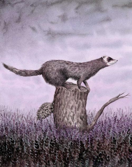 Doninha no tronco de árvore