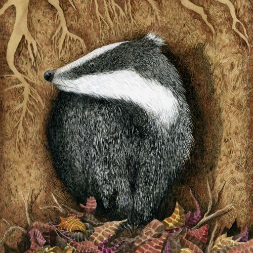 Marieke Nelissen Nature Illustrator from Netherlands