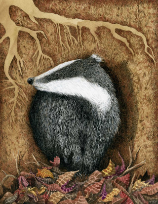 Badger illustration on paper by Marieke Nelissen