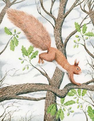 Squirrel in an oak tree