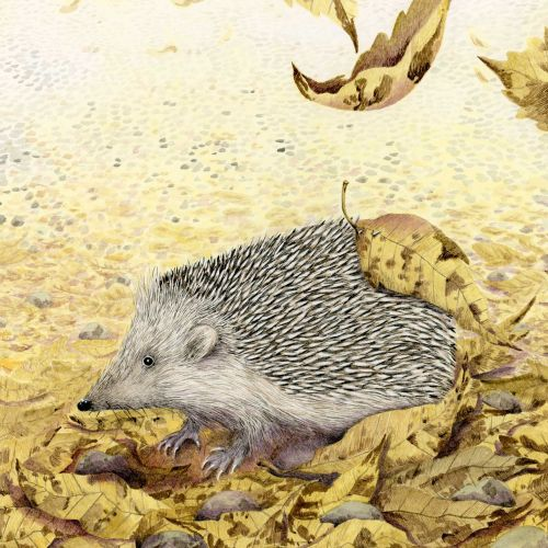 """Hedgehog illustration between autumn leaves """