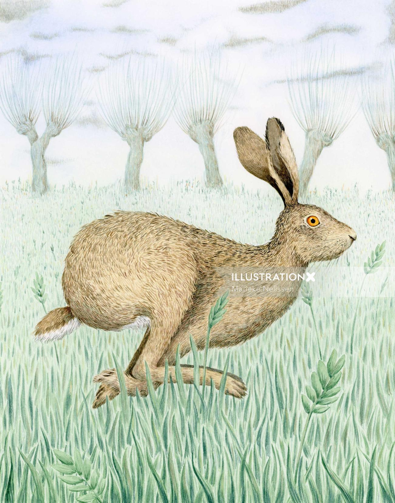 Gouache illustration of Hare in a field
