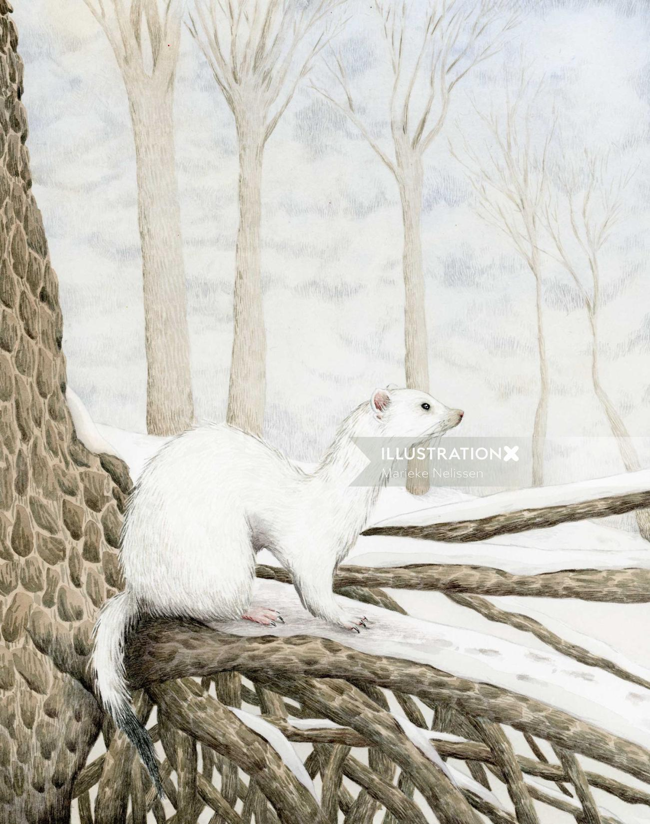 Ermine in the snow