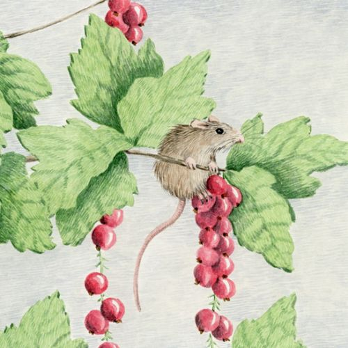 Mice in a berry bush.