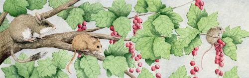Mice in a berry bush.