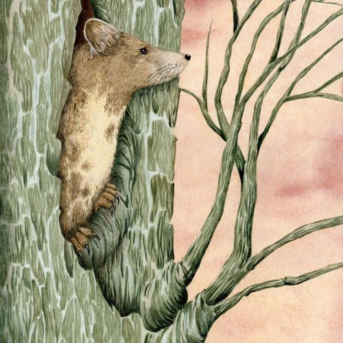 Tree marten in its layer