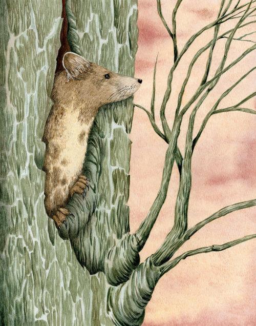 Marta de árvore em sua camada