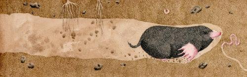 Mole under the ground