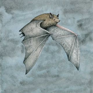 Dwarf bat flying in the nightnight