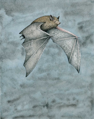 Dwarf bat flying in the nightnight