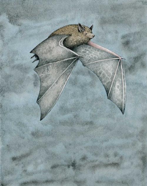 Morcego-anão voando à noite