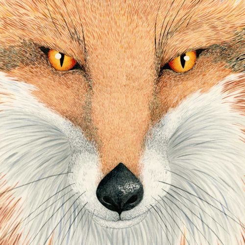 Portrait of a fox by Marieke Nelissen