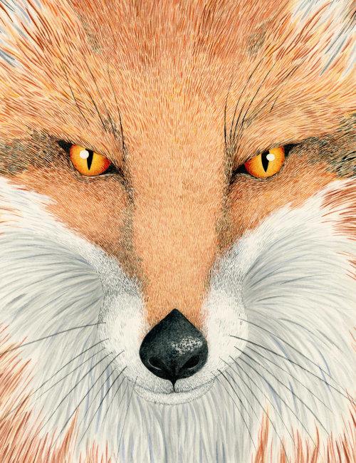 Portrait of a fox by Marieke Nelissen