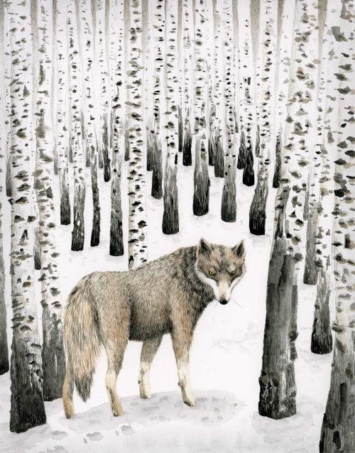 Lobo na floresta de neve de bétula.