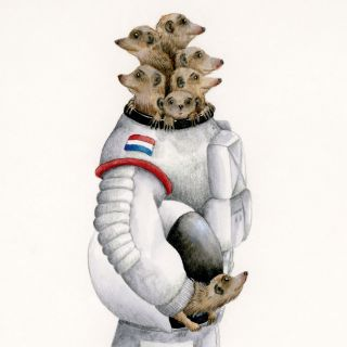 Meerkats in space suit illustration by Marieke Nelissen
